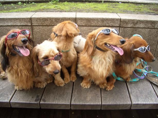 Roppongi_dogs.sized